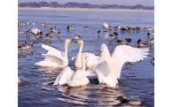 1 ふるさとの山・沼・川などの自然環境を守り、はぐくむ事業