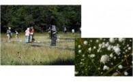 ② 貴重な植物が生息する吉賀池湿地の木道を整備します!
