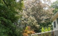 生駒のシンボル・生駒山をナラ枯れから守れコース