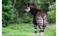 5 動物園を応援したい!(横浜市動物園基金)