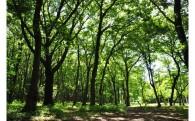 14 小規模樹林地の保全に協力したい!(横浜市協働の森基金)
