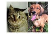 動物愛護基金