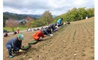 (1)滝上町のシンボルである芝ざくらを、守り育てていくための事業