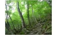 豊かな自然と生物多様性の保全