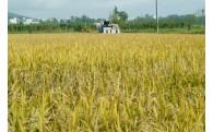 農業振興に関する取組み