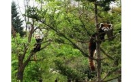 ~いきいきと暮らす動物の姿を~ 茶臼山動物園再整備プロジェクト