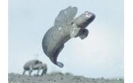 1)宝の海「有明海」の保全・再生