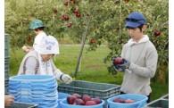 4 果物のブランド化と産業を充実させる事業