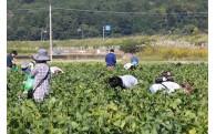 農林産業振興のまちづくり
