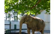 動物園の施設整備や展示動物の充実