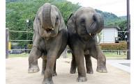 徳山動物園の魅力アップに関する事業