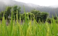 3.村の農業を支援する取り組み