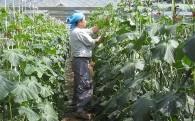 農業の振興に関する事業
