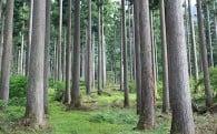 1.百年の森林づくり