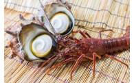 漁業振興に関わる取り組み