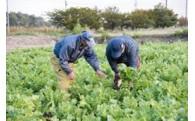 ②あつまの農業経営者育成プロジェクト