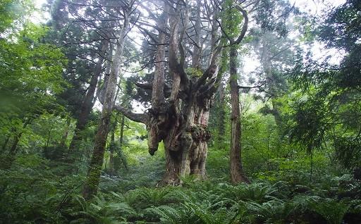 4.自然環境の保全・整備に資する事業
