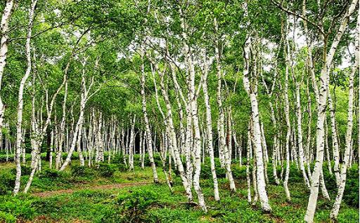1.ふるさとの自然を保全するための事業