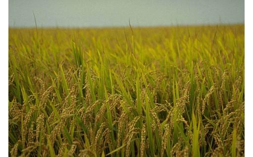 産業(農業、商工業、観光等)振興のための事業