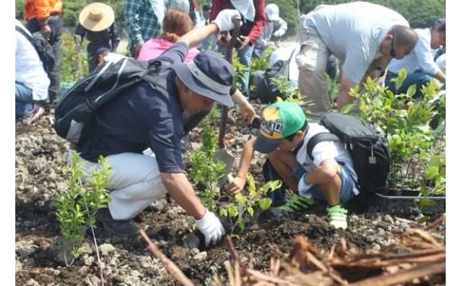 (3)自然環境の保全及び緑化の推進