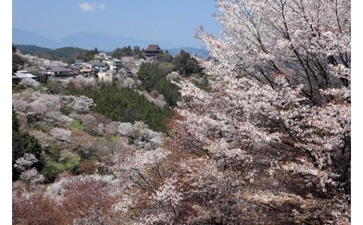 1.吉野の桜コース