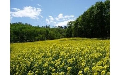 1.自然環境の保全及び景観の維持、再生に関する事業
