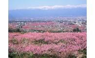 『日本一の桃源郷』の保全と活性化に関すること