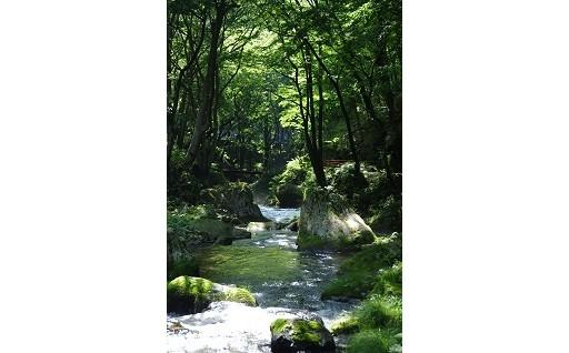 美しい森林(もり)