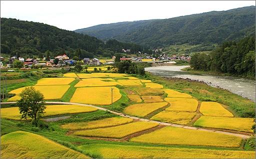 ⑥米農家支援事業(特A米お申込みの方のみ選択)