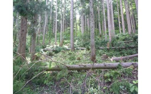 ○環境の保全に関する事業