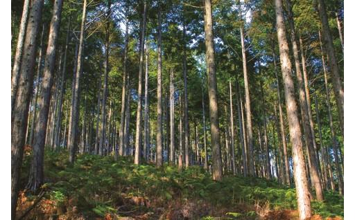 自然との共生、持続可能な社会の実現
