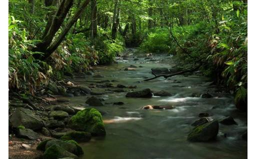 1 森林資源の維持、保全及び整備事業