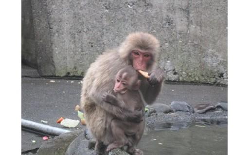 披露山公園のお猿さんたちを応援!