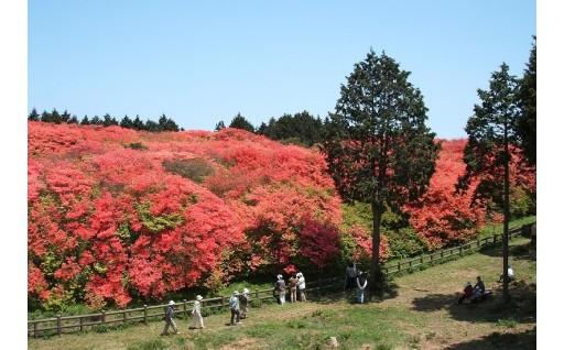 メニュー3 「やすらぎと、美しさのある吉野川市」づくりのために