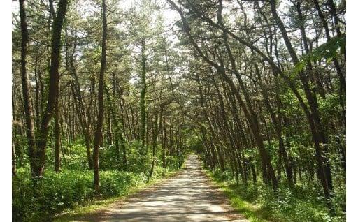 自然や伝統文化の継承