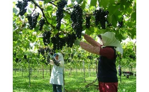 (7)地域農産物の生産振興に関する事業