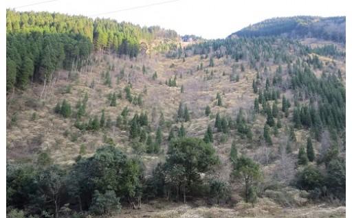 (6)水源涵養林の取得・保全に関する事業