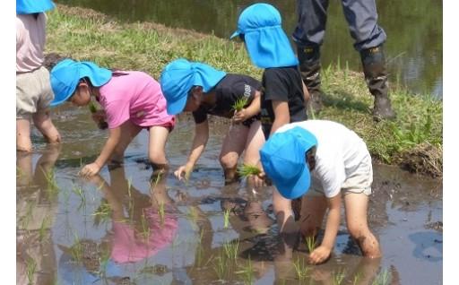 (2)子どもたちの健全な育成に関する事業