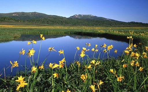 ④雨竜沼湿原の保全に関する事業