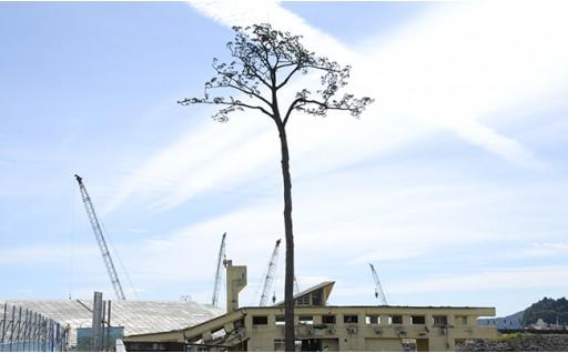 (5) 環境美化のための事業(公園、水辺、里山の保全など)