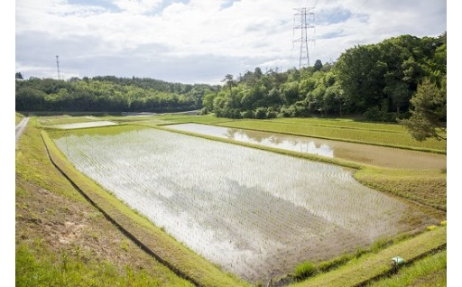 米作り農家応援事業