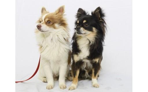 かながわペットのいのち基金(保護した犬猫等のいのちを守り、譲渡する取組に使います。)