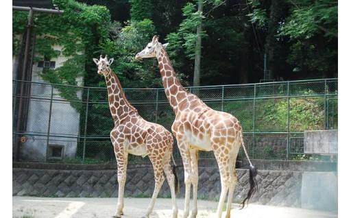 い 動物園