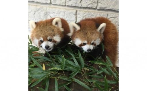 21.夢見ヶ崎動物公園の飼育環境の充実