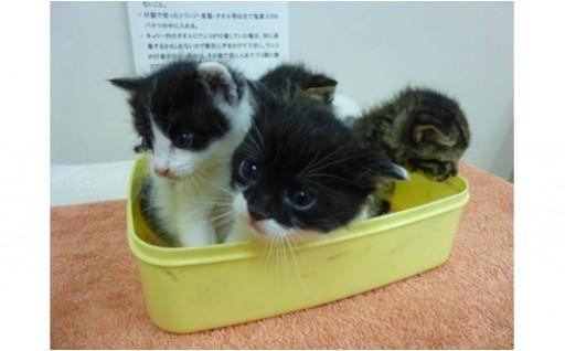 24. 動物愛護センターの動物等への支援
