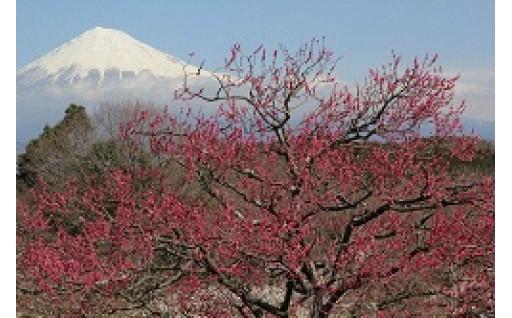 12.岩本山公園の整備