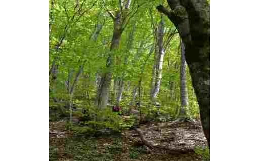 (4)自然環境保全応援事業