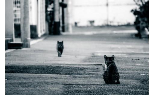 【環境】野良猫ゼロ!動物たちの命を大切にできるまちを目指して