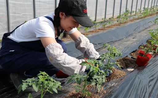 新規就農者育成への支援