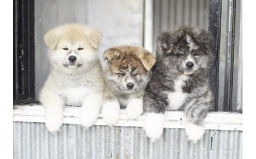 4-1  秋田犬のふるさと大館に関する事業